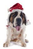 Saint Bernard and hat Royalty Free Stock Images