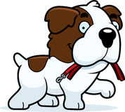 Saint Bernard Leash dos desenhos animados ilustração royalty free
