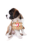 A Saint Bernard puppy with rescue barrel Royalty Free Stock Images