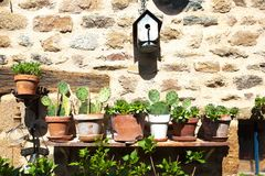 Saint-Ceneri-le-Gerei/FRANCE - April 24, 2018: A row of cacti in pots on a bench in front of an old stone wall Stock Photo