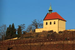 Saint Claire vineyard in Prague Royalty Free Stock Images