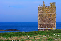 Saint Cuthbert Chapel, Farne Islands, England Royalty Free Stock Image