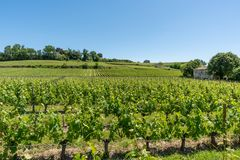 Saint Emilion, Gironde, France. Vineyards around the village. Vineyards in Saint Emilion,near Bordeaux in France, known for its famous wines stock photos