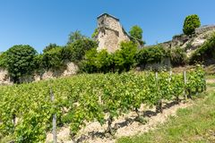 Saint Emilion, Gironde, France. Vineyards around the village. Ruins of the medieval castle and vineyards in Saint Emilion,near Bordeaux in France, known for its royalty free stock photos