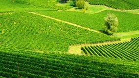 Saint Emilion - pays de vin Image libre de droits