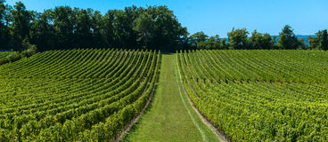 Saint-Emilion-Vineyard landscape-France Stock Photo