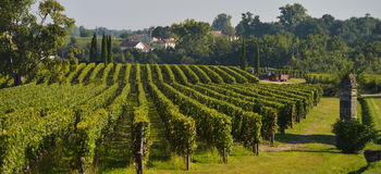 Saint-Emilion-Vineyard landscape Stock Photography