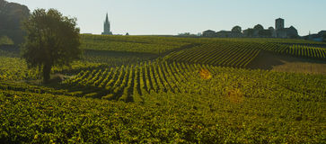 Saint-Emilion-Vineyard landscape-Vineyard south west of France, Royalty Free Stock Images
