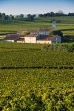 Saint-Emilion-Vineyard landscape-Vineyard south west of France, Stock Image
