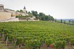 Saint Emilion Winery Stock Image