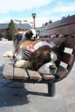 saint för bernardhundfamilj Arkivfoto