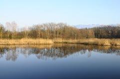 Saint Felix lake and reeds Stock Photography