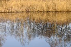 Saint Felix lake and reeds Royalty Free Stock Photography