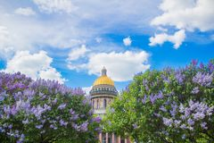 Saint Isaac`s Cathedral in the flowers of lilac and Apple trees stock image