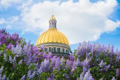Saint Isaac`s Cathedral in the flowers of lilac and Apple trees. SAINT-PETERSBURG, RUSSIA - MAY 22, 2018: Saint Isaac`s Cathedral Isaakievskiy Sobor in the Stock Photo