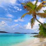 Saint John US Virgin Islands. Palm tree over the beach of Saint John in the US Virgin Islands Stock Photo