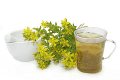 Saint-Johns wort tea Stock Photography