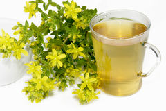 Saint-Johns wort tea Royalty Free Stock Images
