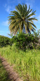 Saint Kitts Landscape Royalty Free Stock Photo