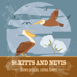 Saint Kitts and Nevis national symbols. Brown pelican, cotton fl Royalty Free Stock Photography