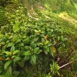Saint Kitts Tropical Vegetation Royalty Free Stock Images