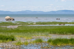 Saint Lawrence river. View over Saint-Lawrence river in quebec stock photos