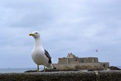 Saint Malo fästning Arkivbilder