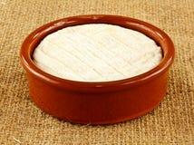 Saint marcellin  cheese Royalty Free Stock Photos