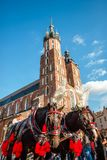 Saint Mary`s Church and carriage with decorated horses in Krakow. Saint Mary`s Church and carriage powered by decorated horses in Krakow, Poland Stock Photos
