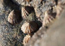 Saint Marys Island Royalty Free Stock Images