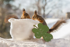 Saint Patrick's Day. Close up of red squirrel standing in a hat of snow and a big clover and other squirrel beside Royalty Free Stock Photography