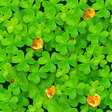 Saint Patrick's clovers seamless pattern with. Saint Patrick's clovers vector seamless pattern with golden coins and ladybugs Royalty Free Stock Photos