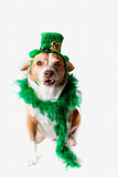 Saint Patrick's Day dog Stock Photography