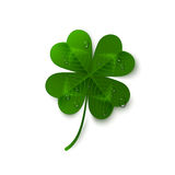 Saint Patrick`s Day four leaf clover with dew. Drops isolated on white background. Holiday 3d icon. Vector illustration. Lucky and success symbol Royalty Free Stock Photo