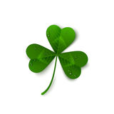 Saint Patrick`s Day three leaf clover with dew Royalty Free Stock Photo