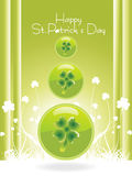 Saint patricks day special with clover Stock Photography