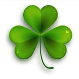 Saint Patricks Day symbol, vector realistic shamrock leaf Royalty Free Stock Photography