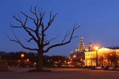 Saint-Petersbugr church in the night. Night view of Church of the Savior on Spilled Blood near the dead tree, Saint-Petersburg, Russia Royalty Free Stock Images