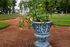 The rose in the vase. SAINT PETERSBURG, RUSSIA - AUGUST 18, 2017: Summer garden. This park is one of the oldest in Saint Petersburg, it was designed by Czar Stock Image