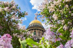 Saint Isaac`s Cathedral in the flowers of lilac and Apple trees. SAINT-PETERSBURG, RUSSIA - MAY 22, 2018: Saint Isaac`s Cathedral Isaakievskiy Sobor in the Stock Photos