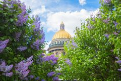 Saint Isaac`s Cathedral in the flowers of lilac and Apple trees. SAINT-PETERSBURG, RUSSIA - MAY 22, 2018: Saint Isaac`s Cathedral Isaakievskiy Sobor in the Stock Image