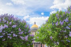 Saint Isaac`s Cathedral in the flowers of lilac and Apple trees royalty free stock photos