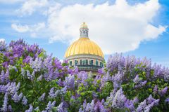Saint Isaac`s Cathedral in the flowers of lilac and Apple trees stock photo