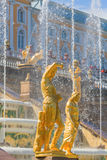 SAINT PETERSBURG, RUSSIA - MAY 29, 2015: Sculptures and fountains of Grand Cascade in Peterhof Stock Photography