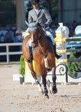 SAINT PETERSBURGO 5 DE JULHO: Rider Gunnar Klettenberg em Ulrike R mim Imagens de Stock Royalty Free