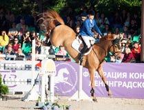 SAINT PETERSBURGO 5 DE JULHO: Rider Valeriya Sokolova em Sir Stanwel Fotografia de Stock