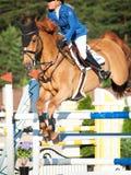 SAINT PETERSBURGO 5 DE JULHO: Rider Valeriya Sokolova em Sir Stanwel Fotos de Stock Royalty Free