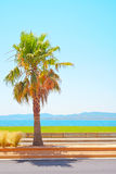 Saint Raphael beach, sea bay and palm. Provence. Saint Raphael beach, sea bay and palm. Azure Coast, Provence, France Royalty Free Stock Photography