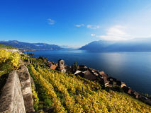 Saint Saphorin in Lavaux vineyards, Switzerland Stock Photo