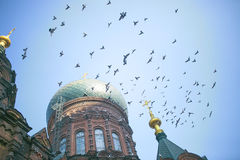 Saint sophia cathedral and pigeons Royalty Free Stock Image